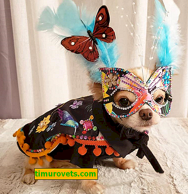 You will like these models!  Stylish animal fashion show looks