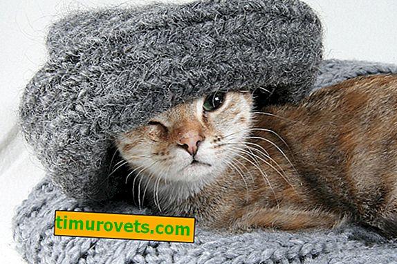 ¿Qué se puede tejer con pelo de gato?
