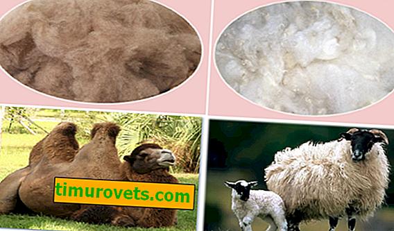 Koje je toplije - ovčja vuna ili deva?