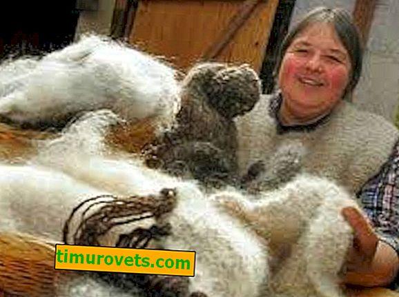 Što je napravljeno od vune?
