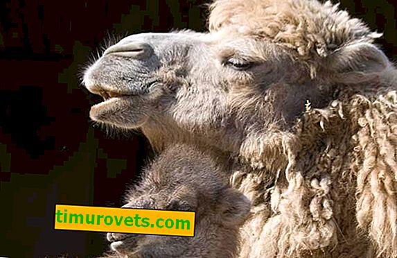 ¿Qué lana es la más cálida?