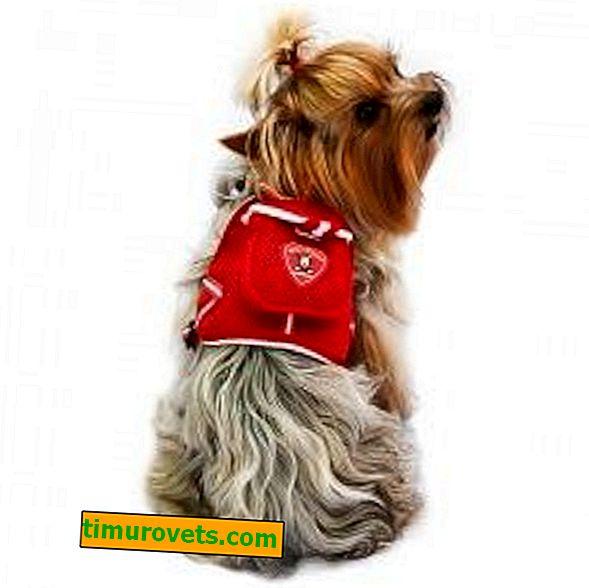 Направи си сама раница за куче на гърба му