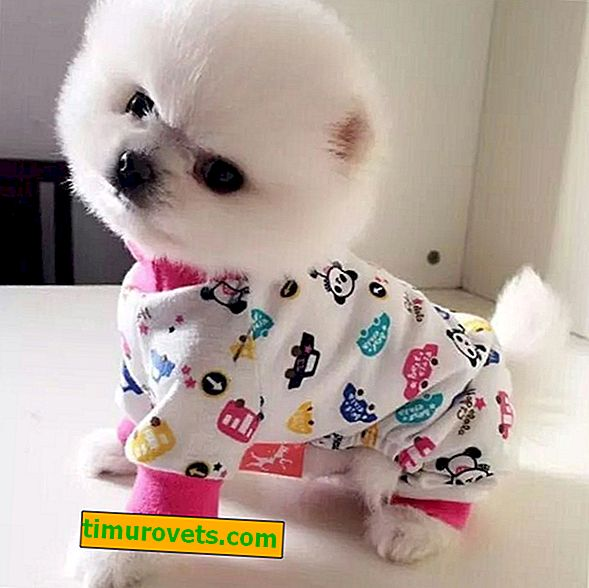 Funny overalls for dogs