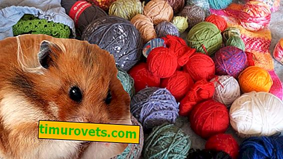 Why knitters are called hamsters