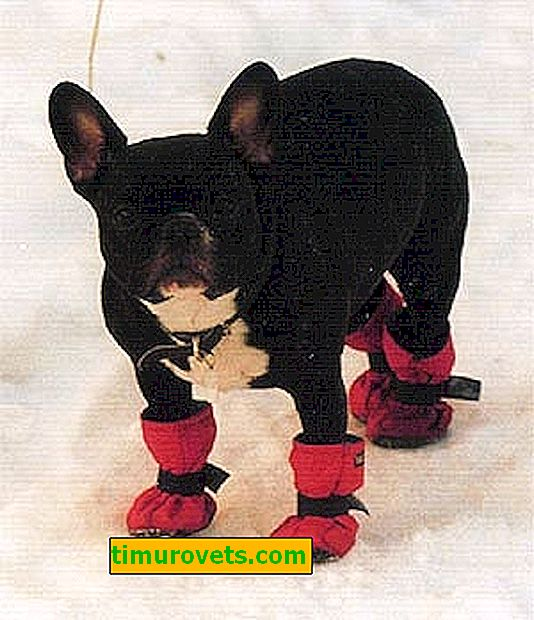 Направи си обувки за кучета